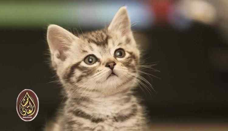 استنجدت بالجيران.. قطة تنقذ منزل من حريق كبير في حلب